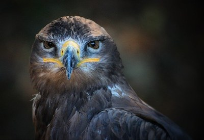Virtual Science Storytime - Amazing Animal Adaptations