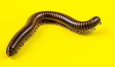 Virtual Science Storytime - Creepy Crawlies!