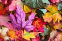 Science Storytime: Falling for Fall Foliage